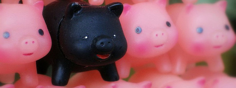 Black_toy_pig_among_pink_toy_pigs